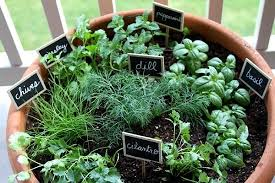 contaier herbs
